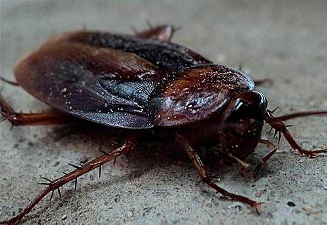 Consejos para eliminar cucarachas