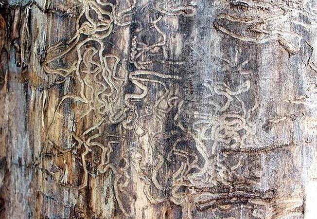 Barreras efectivas y limpias contra los daños por termitas