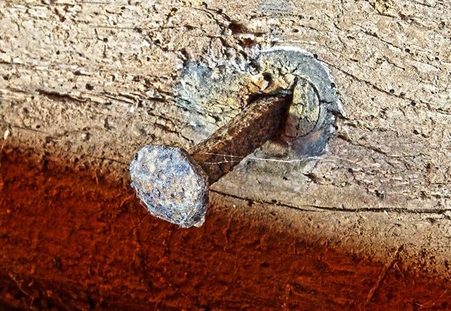 La forma de actuar de las termitas