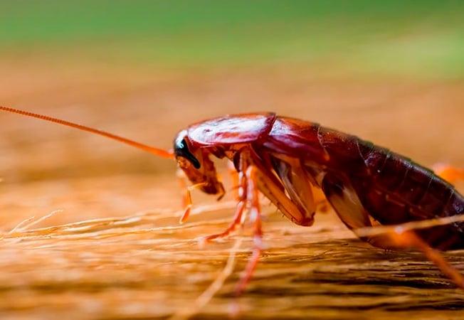 El calor incide en el aumento de las plagas