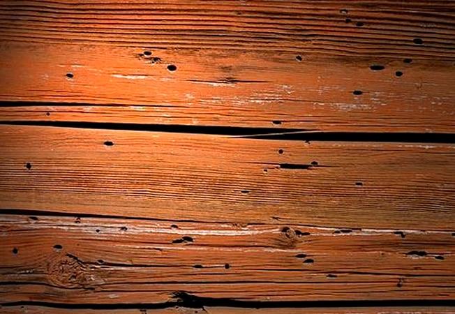 Conociendo los peligros de los xilófagos termitas y carcoma