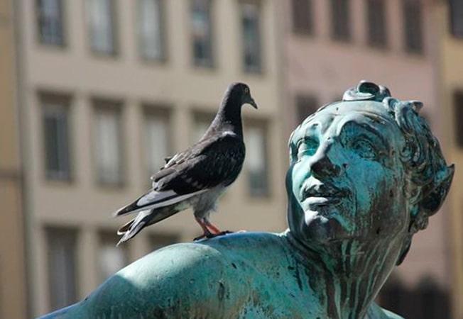 Los peligros que traen consigo las palomas