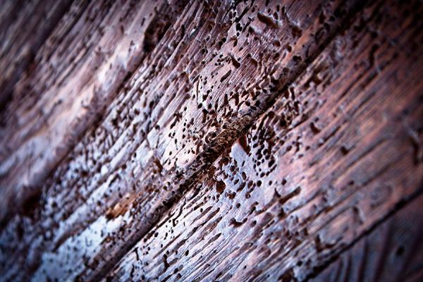 Tratamientos de patologías de la madera